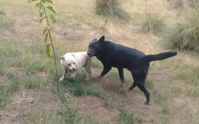 Gos y Bones